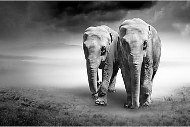 CANVAS Tavla Elephant