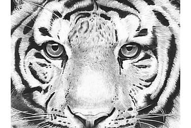 CANVAS Tavla Tiger 80x110 cm
