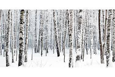 CANVASTAVLA Winter Birch 70x140