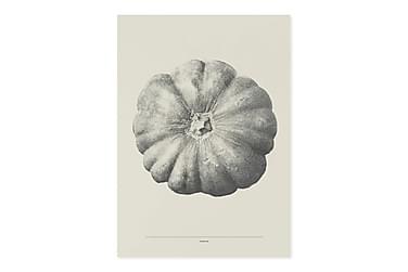 CAUL Kort Pumpkin Gul