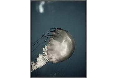 TAVLA Jellyfish 50x70