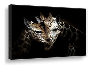 TAVLA Wild Giraffes 75x100
