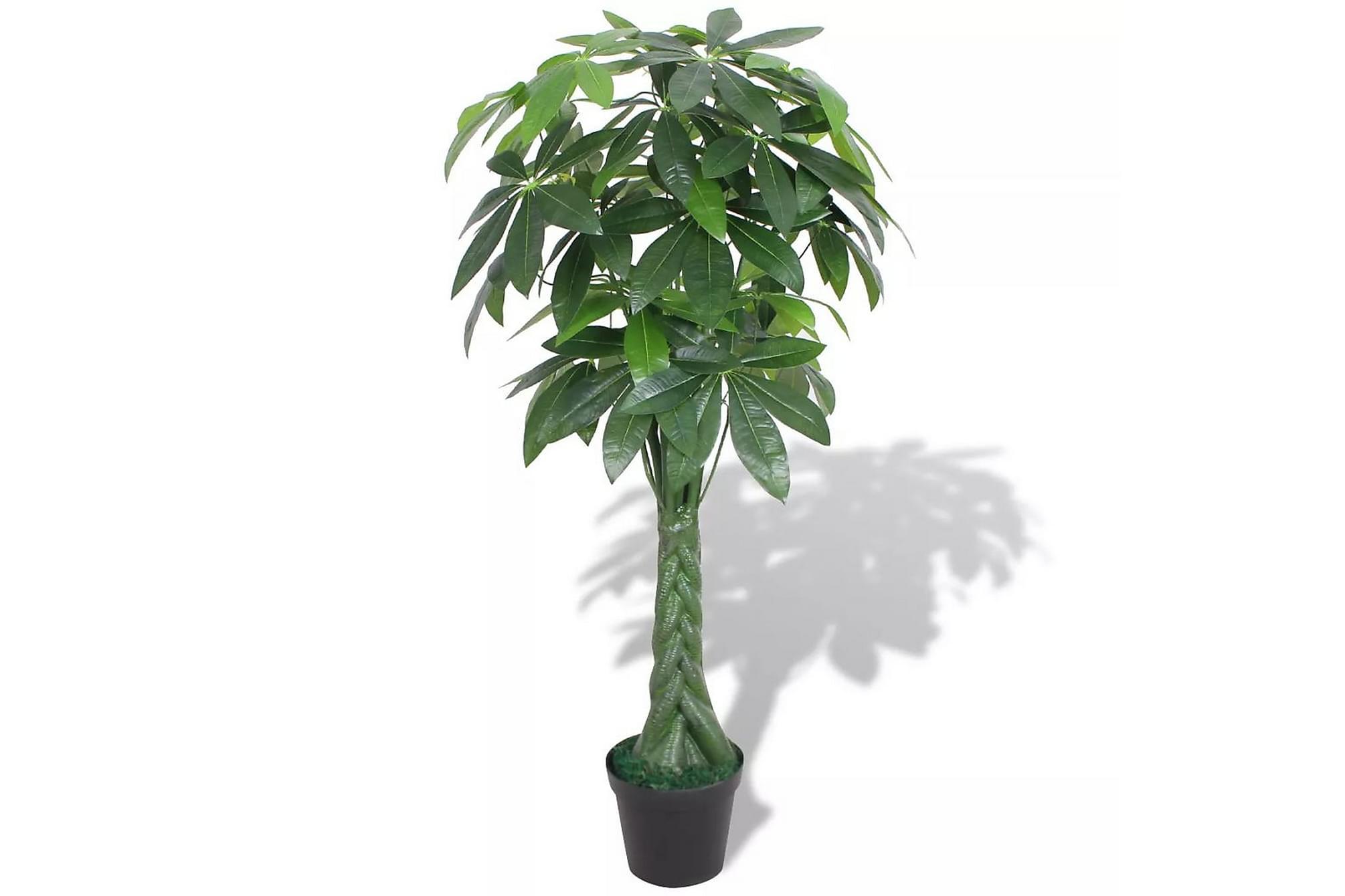 Konstväxt Pengaträd