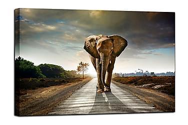 TAVLA Elephant 75x100