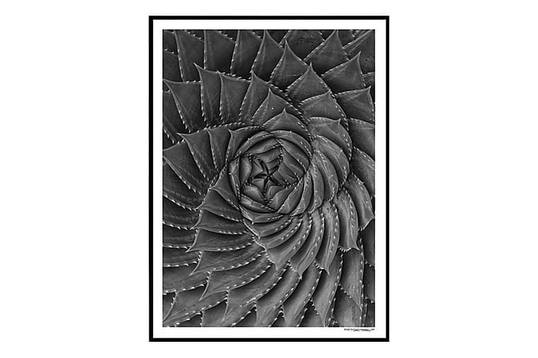 POSTER Aloe - Möbler & Inredning - Inredning - Posters & tavlor